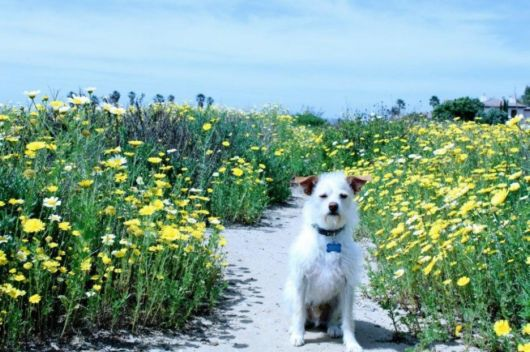 Dogs Finding It Hard to Enjoy Things Humans Like Doing