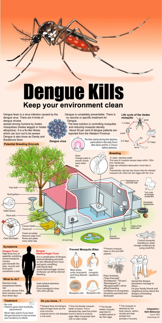 Know Everything About Dengue