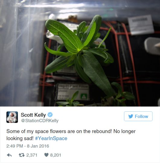 The First Ever Flower Grown In Space By NASA Astronaut