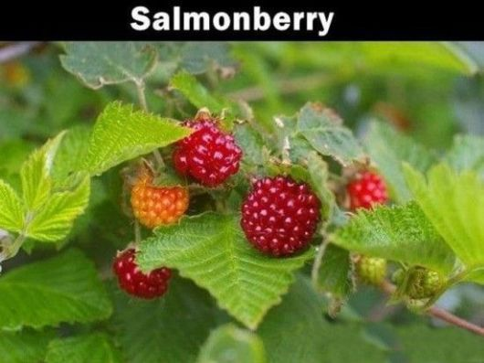 Fruits That You Probably Never Heard About