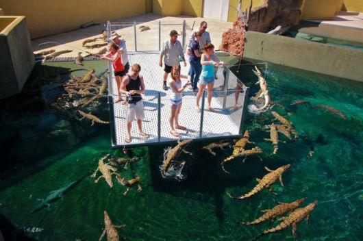 The Crocosaurus Cove Park, Australia