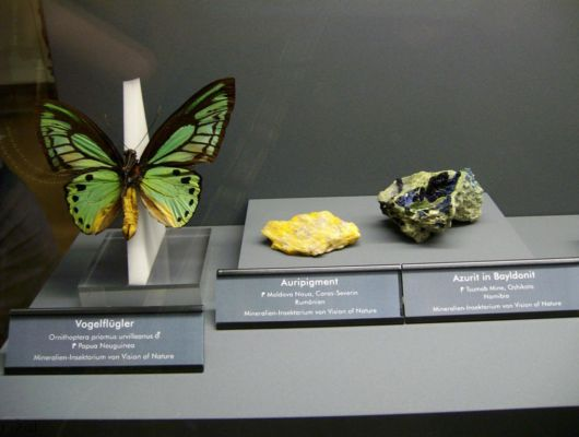 A Museum Of Stones And Insects