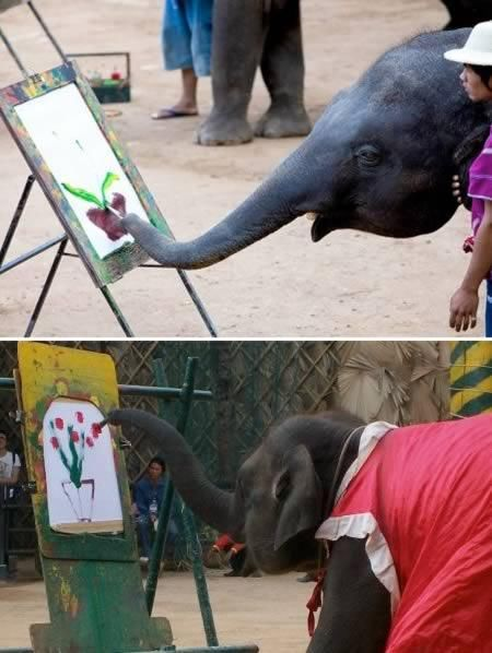 Coolest Animal Artists On Work