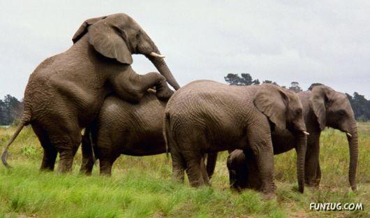 Beautiful Elephants Wallpapers