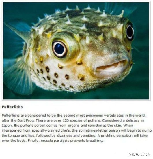 10 Animals That You Do NOT Want To Meet