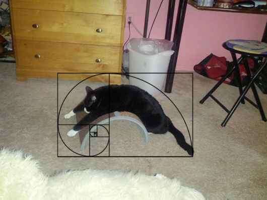 Amazing Furbonacci Sequence Proves That Cats Are Purrfect