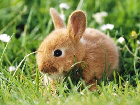 Very Cute Rabbits for You