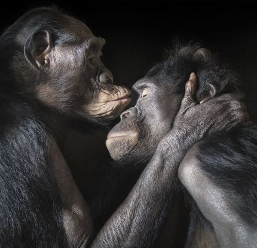 Animals Prove That Kisses Aren't Just For People