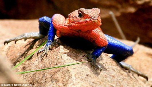 A Lizard That Looks Like Spiderman