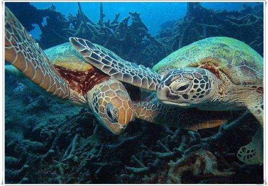 Cute Sea Turtle Family