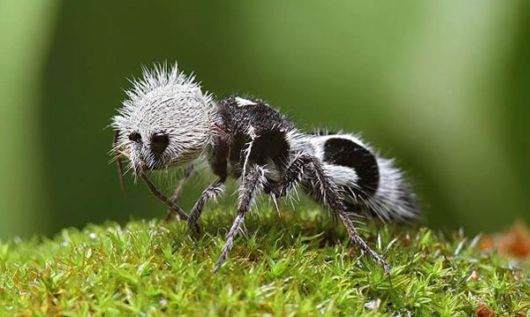 Terrifying And Strange Animals That You Didn't Even Know Existed
