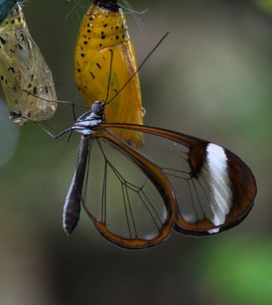 Awesome Transparent Butterfly